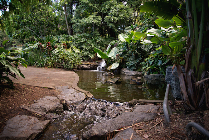 City Botanic Gardens, Brisbane Australia | NaomiVanDoren.com