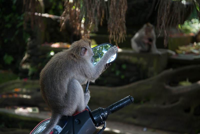 Ubud-Moneky-Park-Indonesia-Naomi-VanDoren-40.jpg