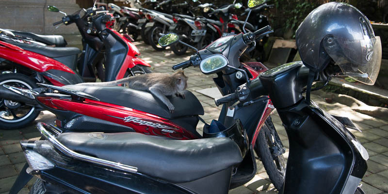 Indonesia-Travel-Tips-Bali-Transportation-motorbike.jpg