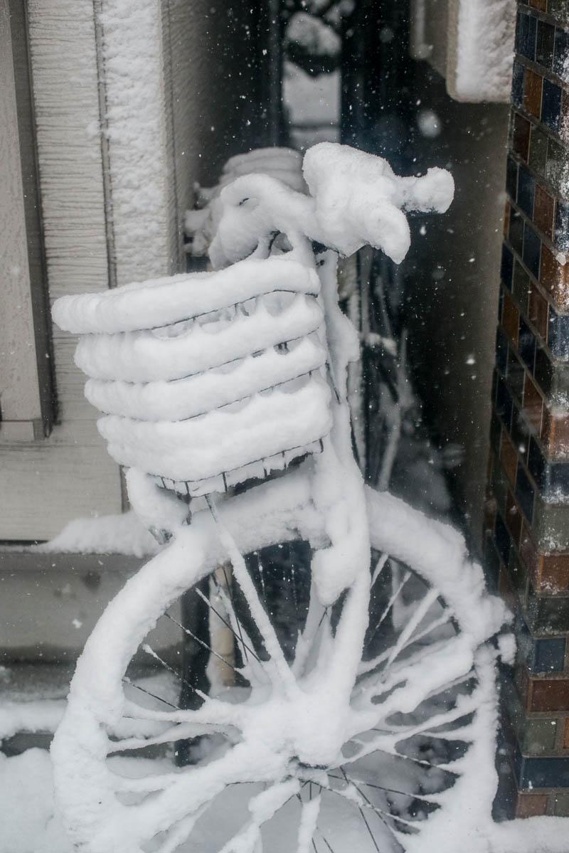 Snow Day Japan Naomi VanDoren-11.jpg