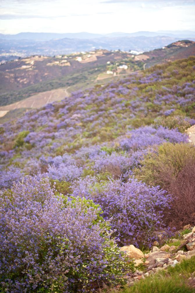 Double-Peak-Park-CA-Naomi-VanDoren 1.jpg