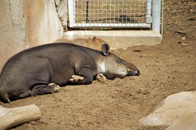 San-Diego-Zoo-CA-Naomi-VanDoren 22.jpg