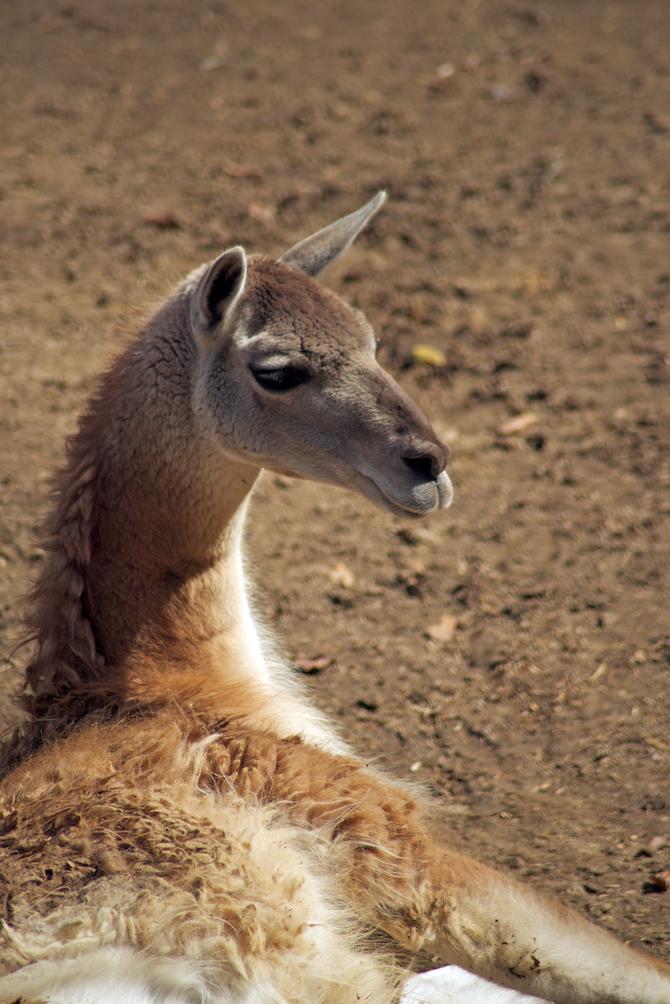 San-Diego-Zoo-CA-Naomi-VanDoren 23.jpg