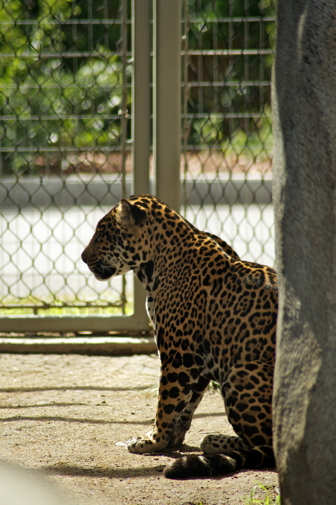 San-Diego-Zoo-CA-Naomi-VanDoren 30.jpg