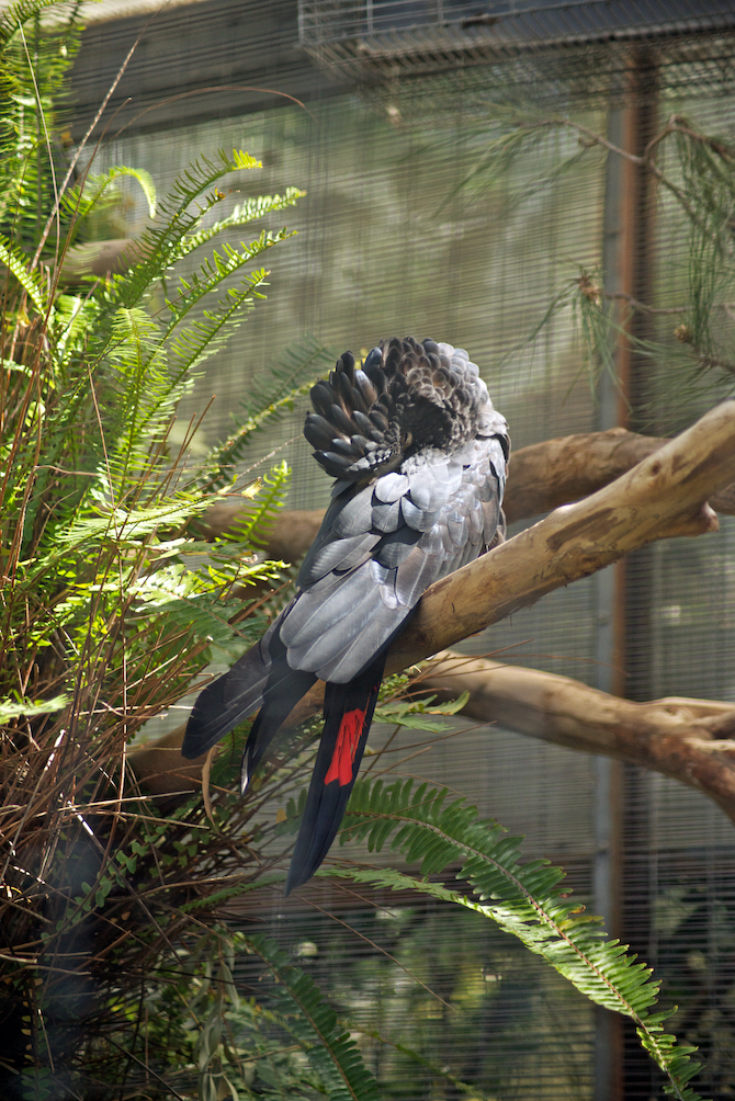San-Diego-Zoo-CA-Naomi-VanDoren 11.jpg