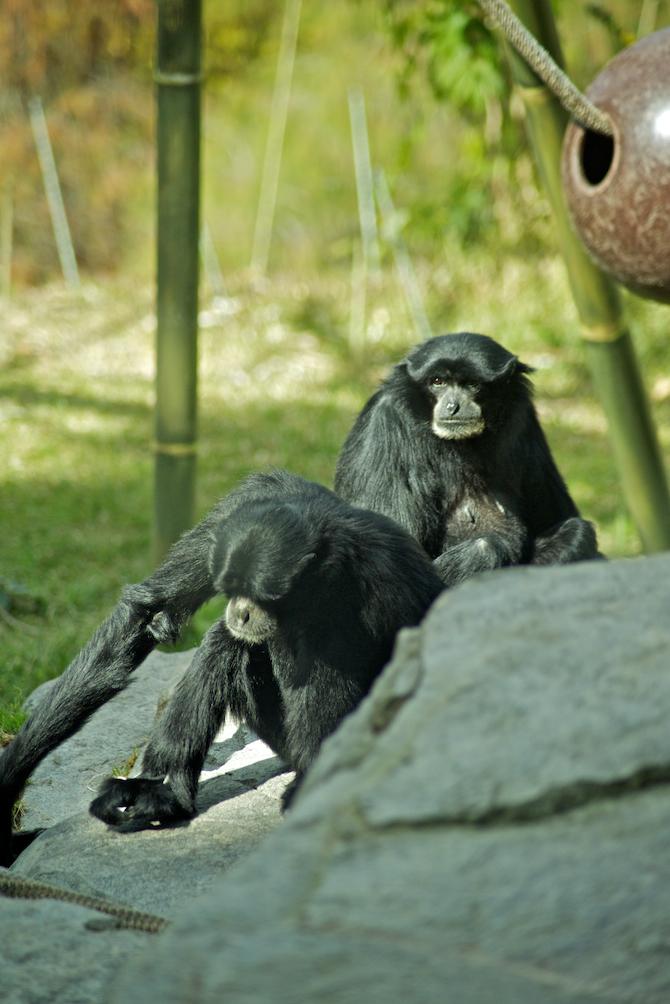 San-Diego-Zoo-CA-Naomi-VanDoren 7.jpg