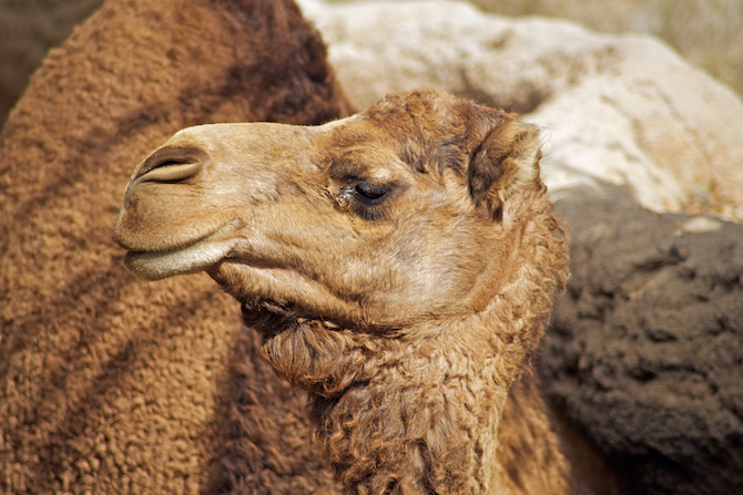 San-Diego-Zoo-CA-Naomi-VanDoren 26.jpg