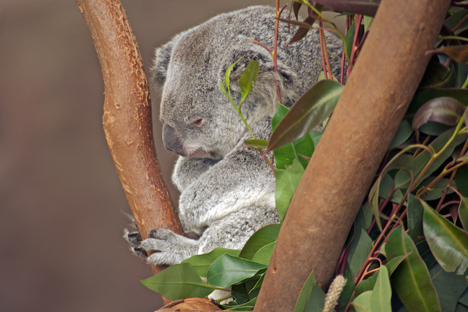 San-Diego-Zoo-CA-Naomi-VanDoren 35.jpg