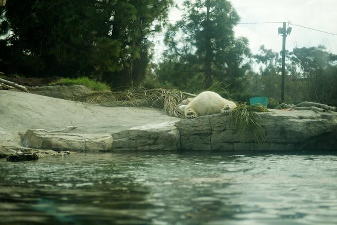 San-Diego-Zoo-CA-Naomi-VanDoren 49.jpg