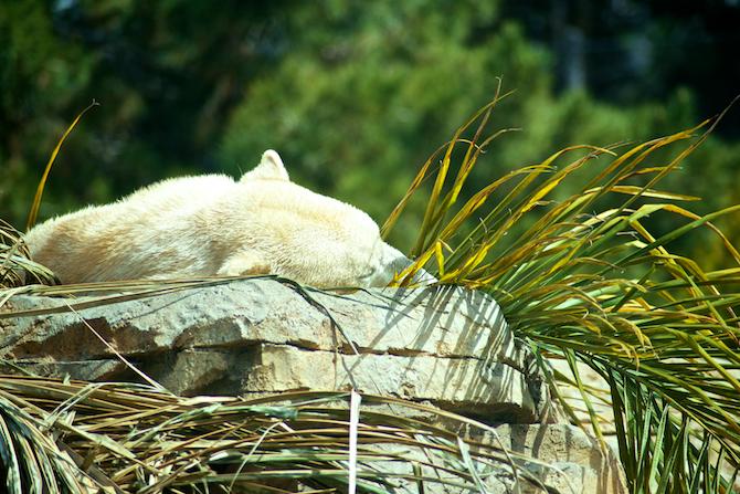 San-Diego-Zoo-CA-Naomi-VanDoren 50.jpg