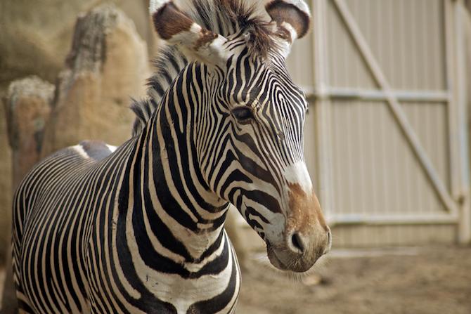 San-Diego-Zoo-CA-Naomi-VanDoren 39.jpg