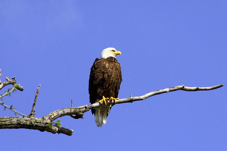 mn-wildlife-photographer