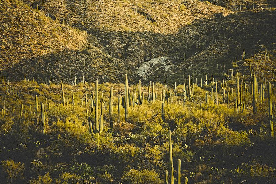 new-mexico-lodge-photographer