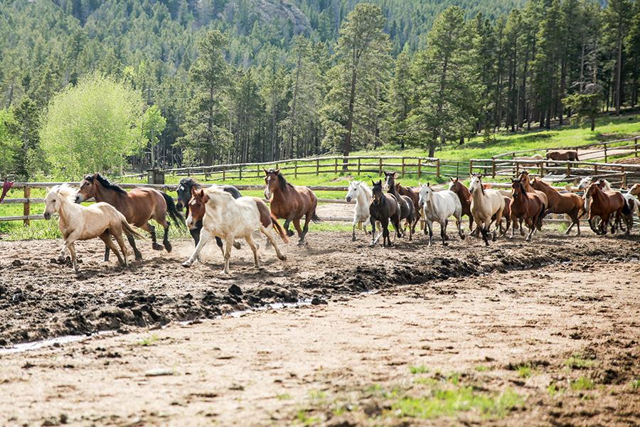 colorado-dude-ranch-photographer