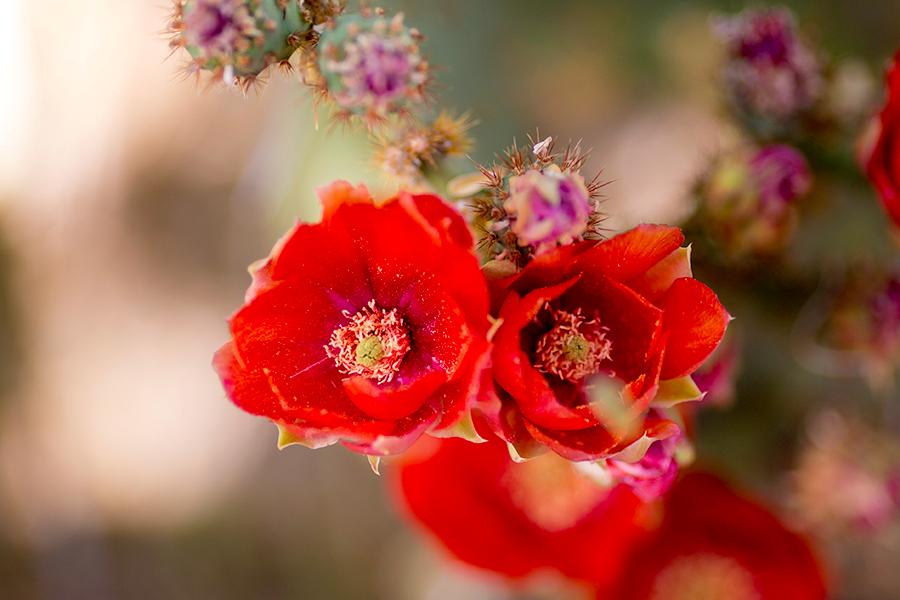 best-colorado-springs-resort-photographer