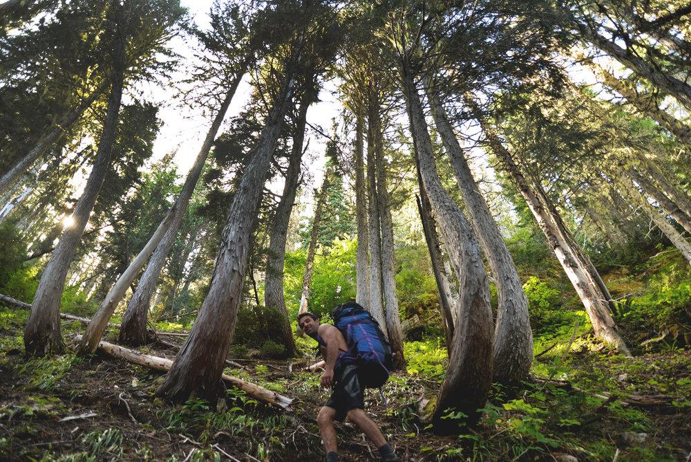 hiking 150.jpg