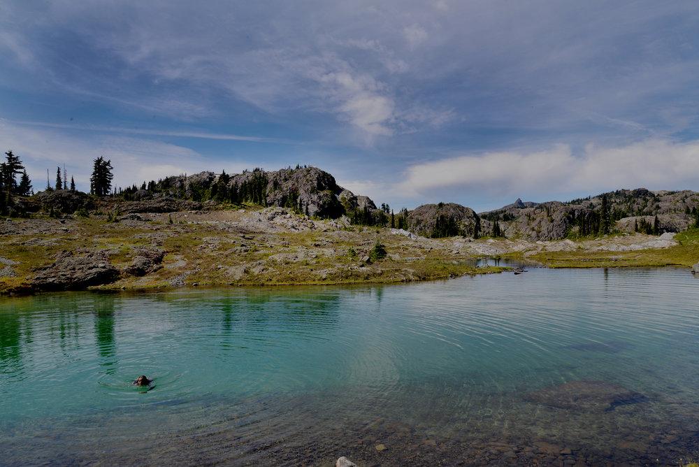 lake swim 150.jpg
