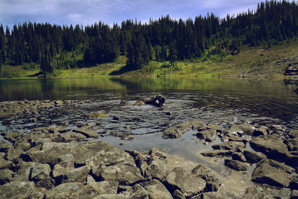lake swim 2 150.jpg