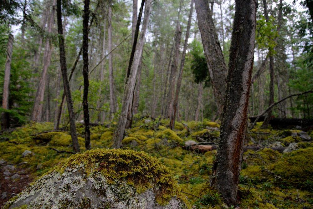 forest moss 150.jpg