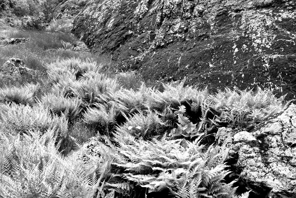furn gully 150.jpg
