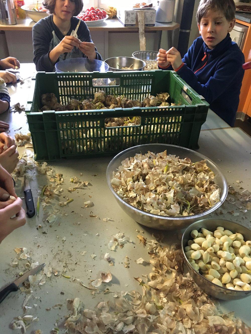 Louis und Camillo schälen tonnenweise Knoblauch, damit eine Knoblauchpaste hergestellt werden konnte, welche im Hofladen verkauft wurde