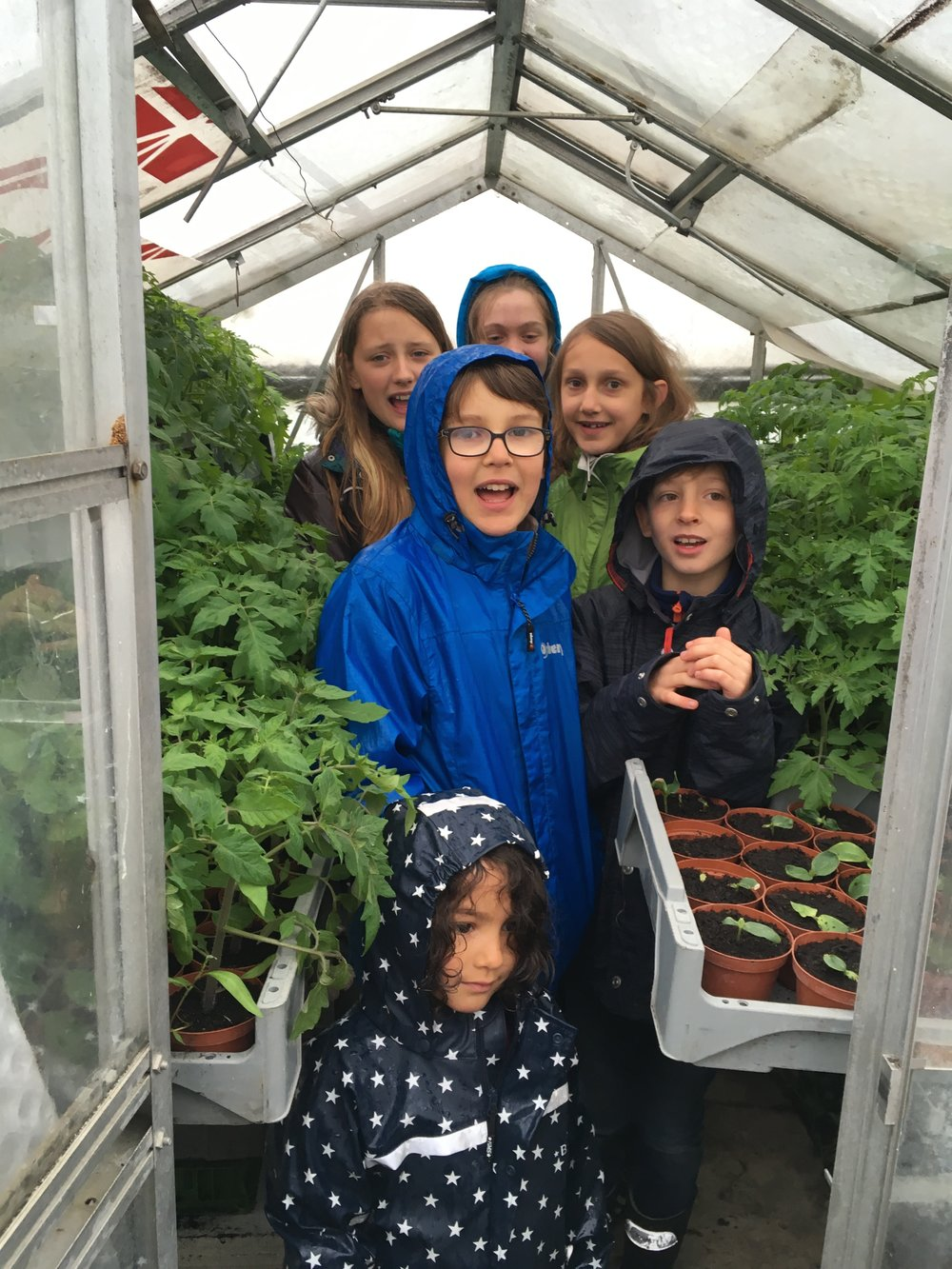 Bei den Tomatensetzlingen im Treibhaus.