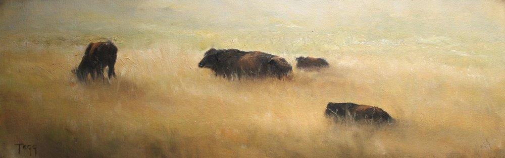 yellow field cows.jpg