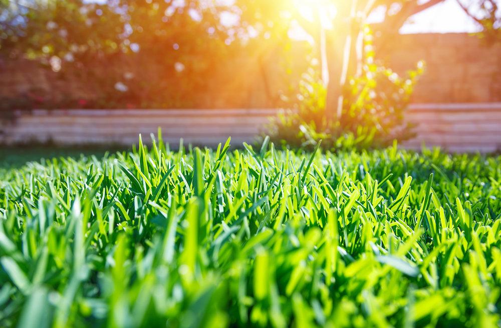 Lawn photo.jpg