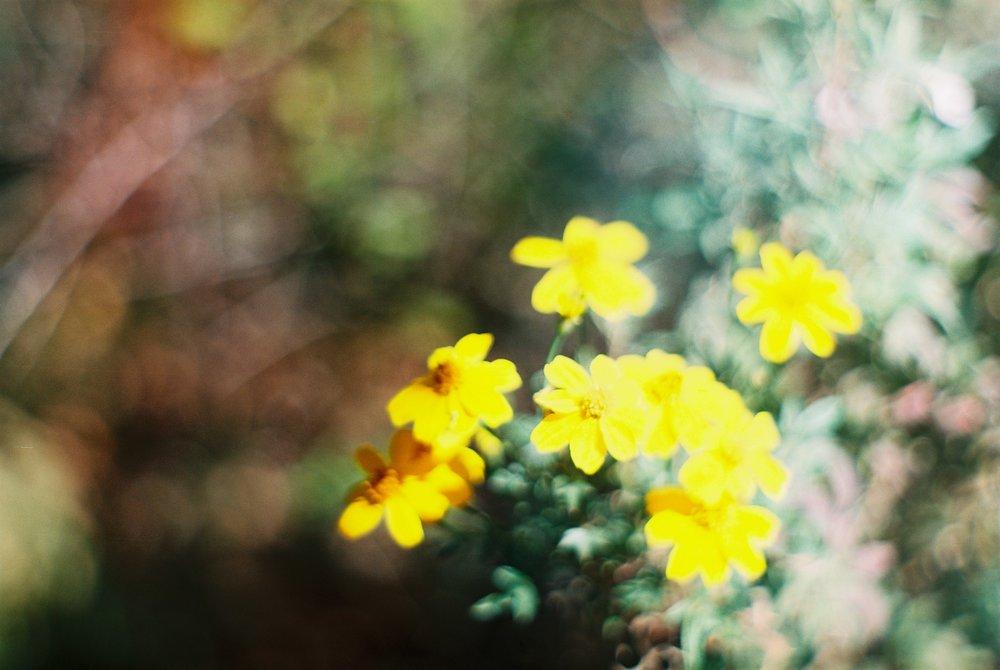 Flowers Photo Field Trip California Lifestyle Analogue Photographer