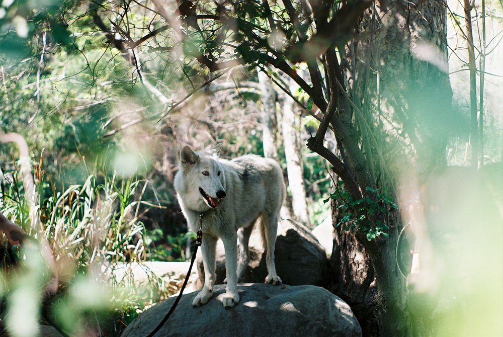 Photo Field Trip California Lifestyle Analogue Photographer Wolf