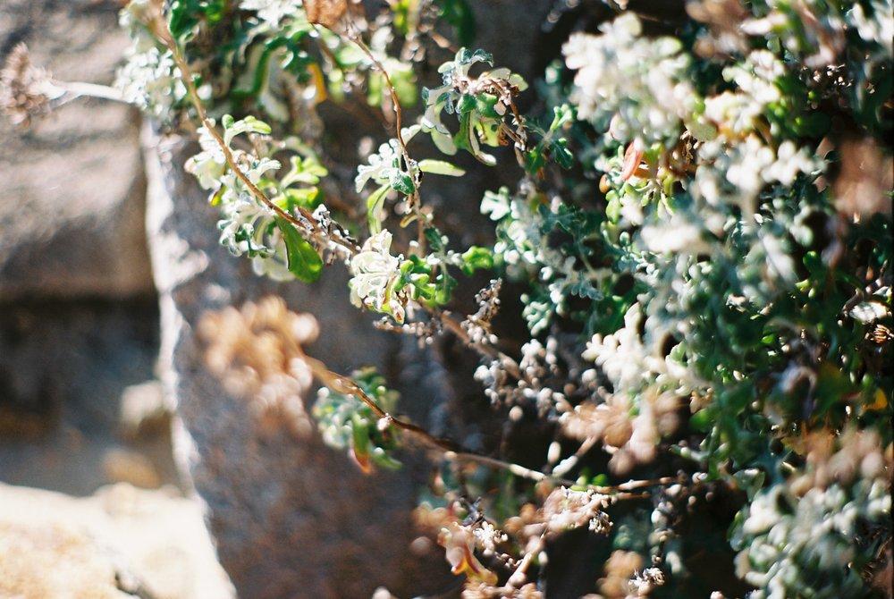 Leaves Morro Rock California Analogue Travel Photographer