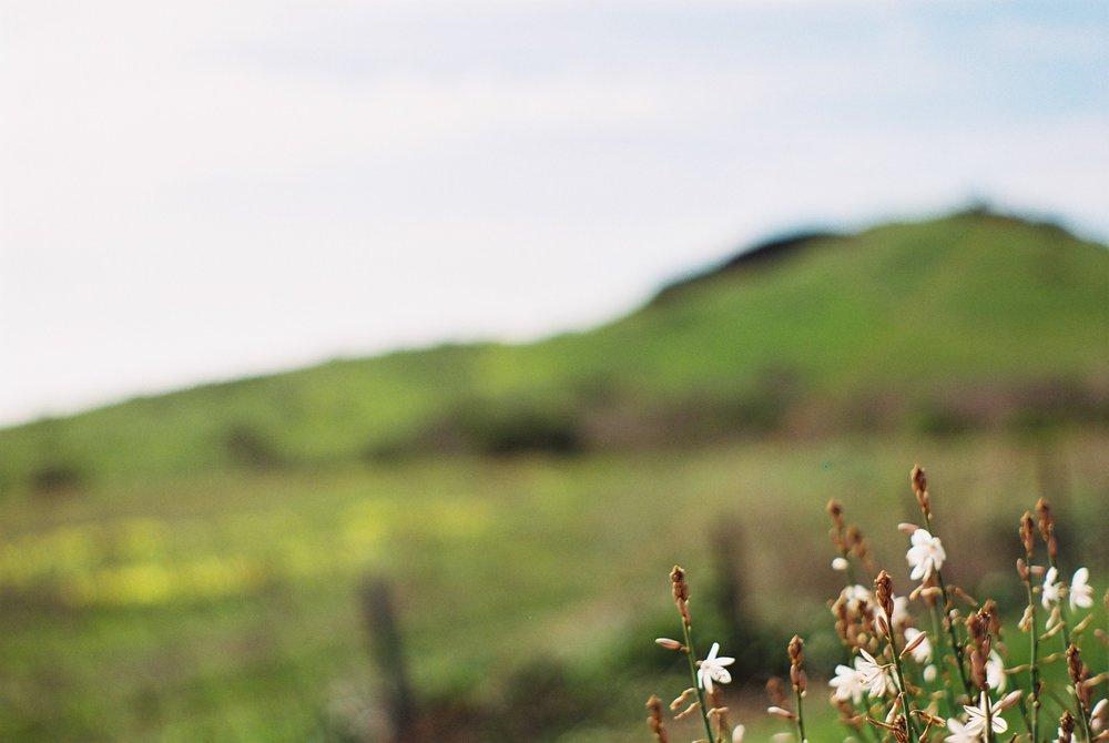 Flowers Highway 1 California Analogue Travel Photographer