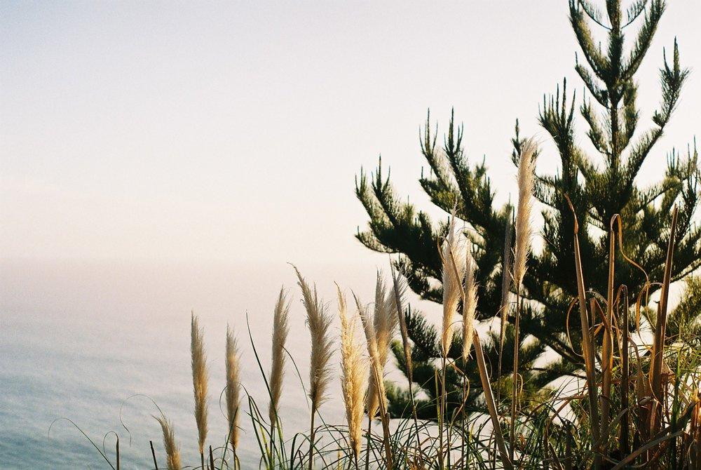 Pampas Grass Highway 1 California Analogue Travel Photographer
