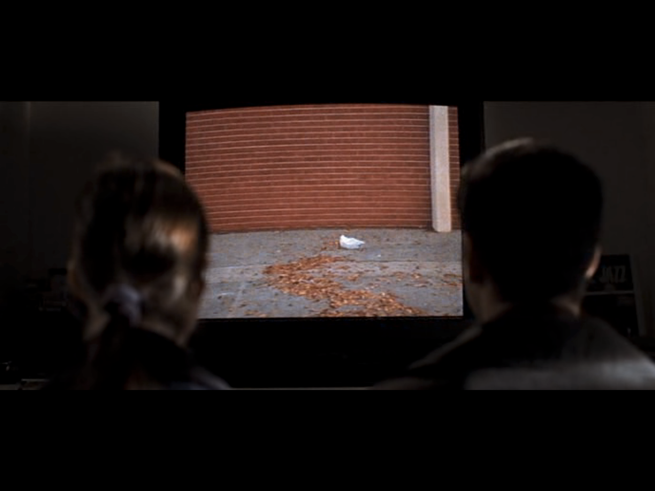 From American Beauty. What a greatmovie!