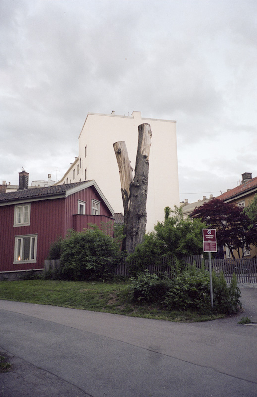 A building with no eyes, a tree with no arms.