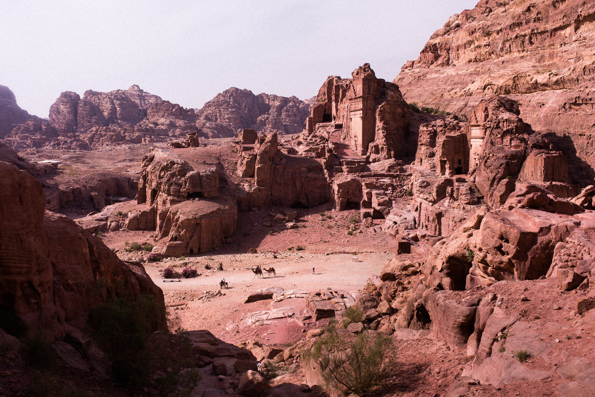Petra landscape with camels.