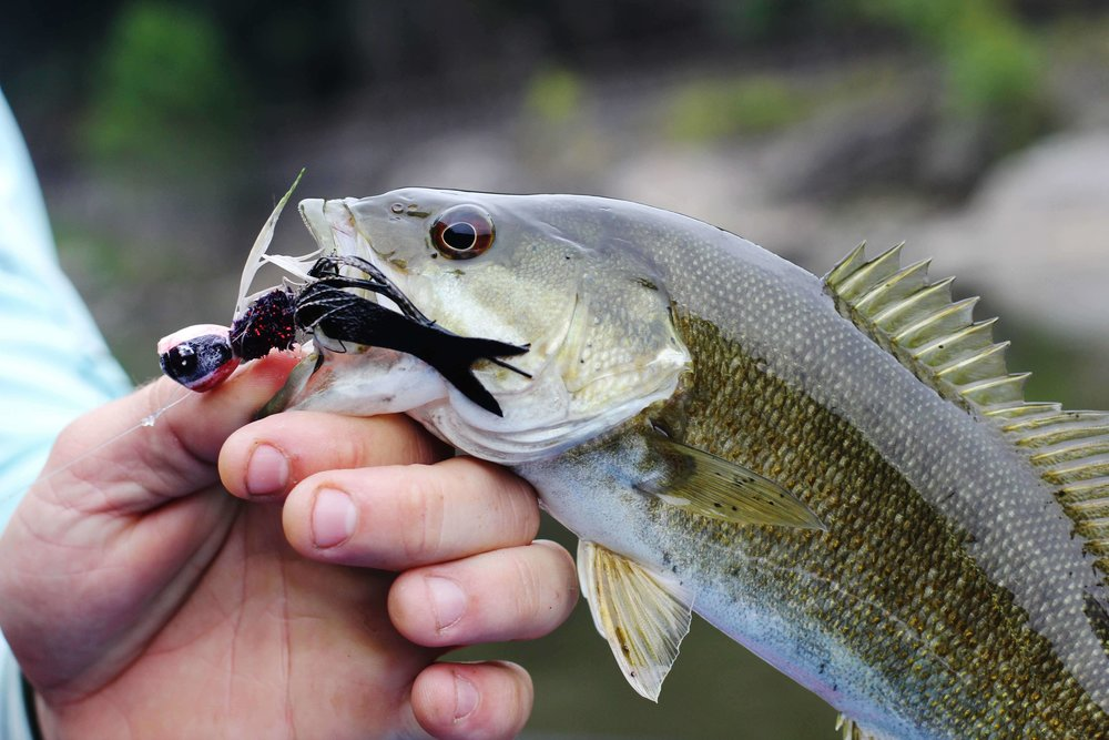 Guided Smallmouth Bass Trips - Asheville Fly Fishing Company