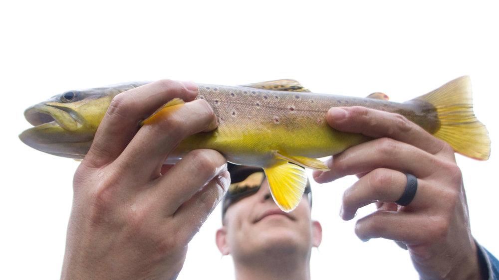 Asheville Fly Fishing Company - 1_20 12.23.47 AM.jpg
