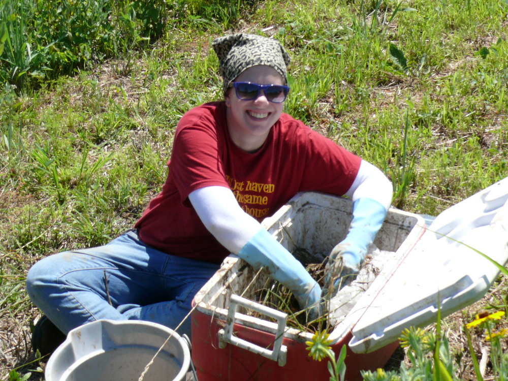 Dawn Decolibus, REU student  in 2012. Dawn investigated the relationship between fungal endophytes, tall fescue, and native warm season grassland restorations.
