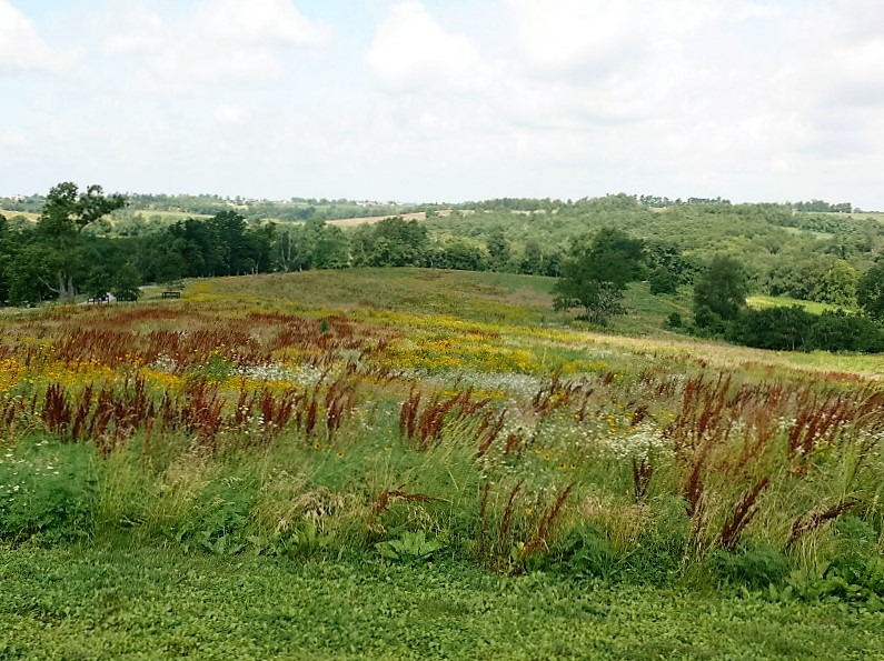 Native Warm Season Grassland Restoration in Kentucky