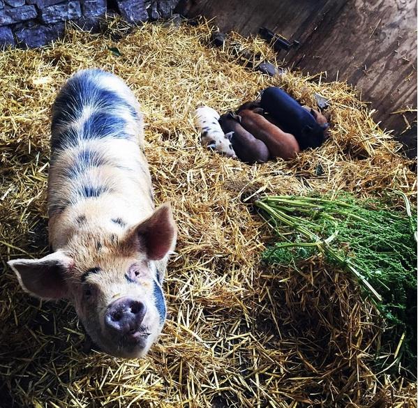 Dotty & piglets.jpg