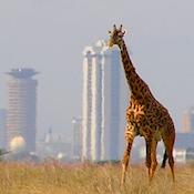 Safaricom startup fund