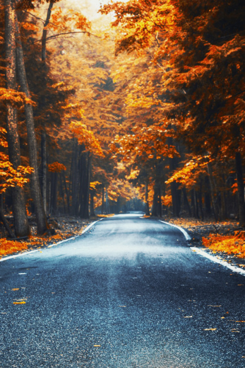 mstrkrftz :      Tunnel of Trees by Brandon Thorne