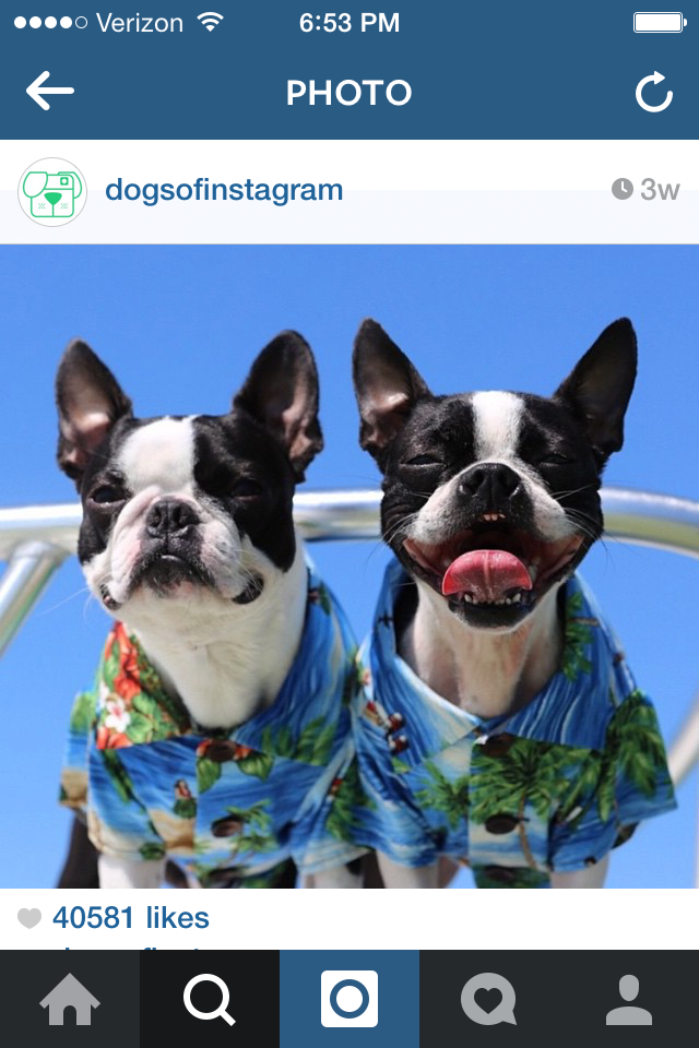 @DogsOfInstagram