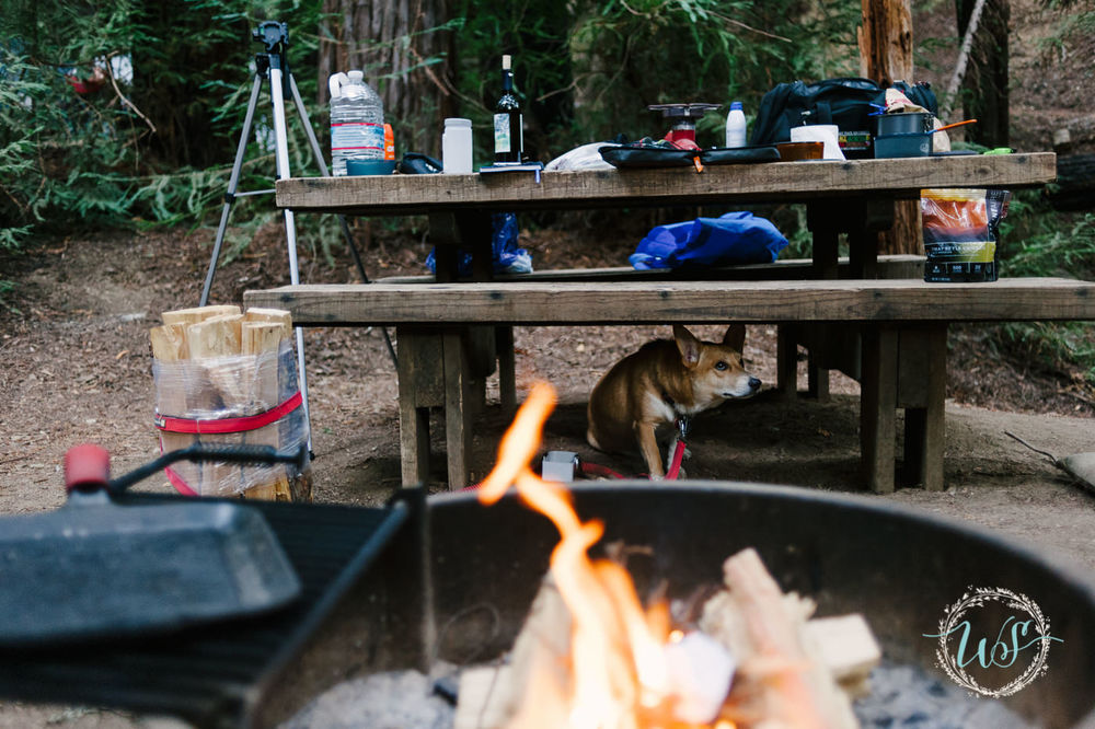 Fire/woods/camping =  terrifying  for puppies.