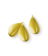 icon-seed.png