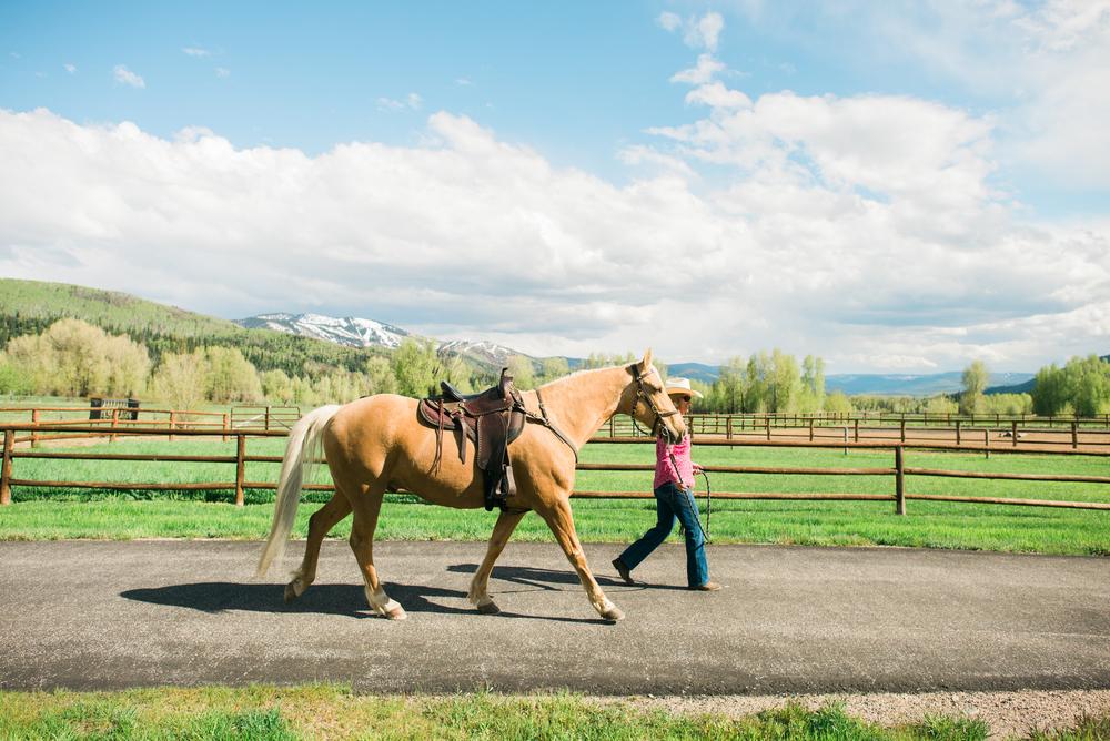 Sotheby's_Equestrian_5-18-15_Photos52461.jpg