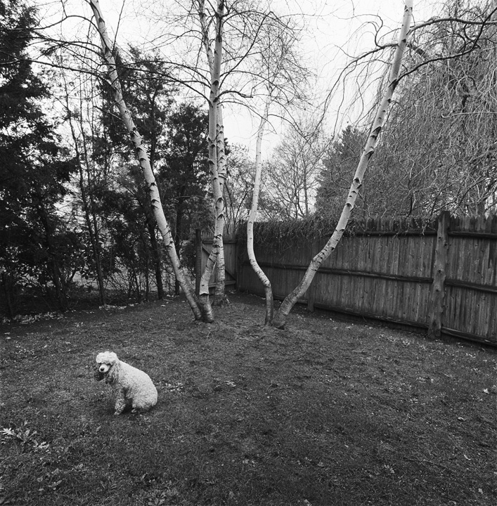 Chammie, Backyard, Newton, MA, 1971