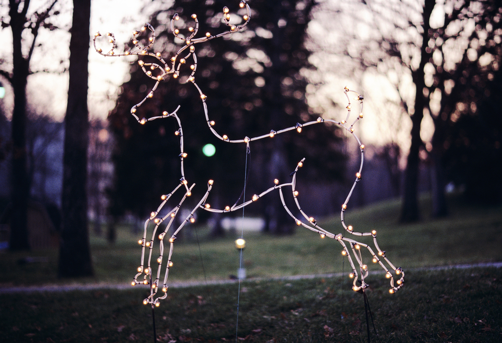 Reindeer, A Branson Christmas, 1997