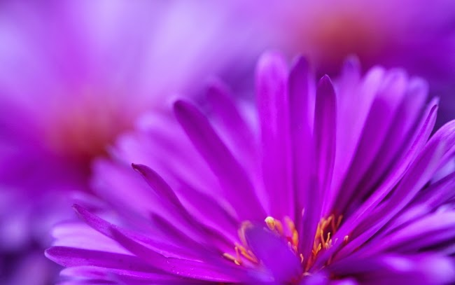 Zoom-Purple-Flower_tn2.jpg